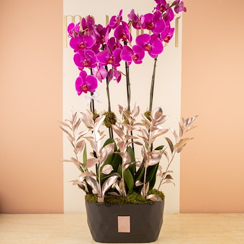 Orchidian Way 7