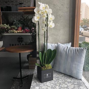 Phalo Flower Box White