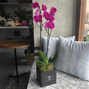 Phalo Flower Box Purple