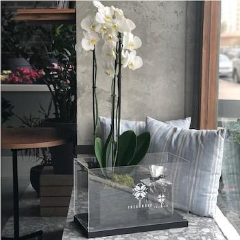 Precious White Orchid