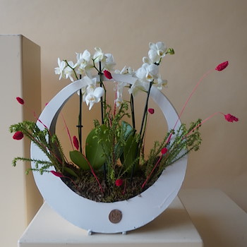 Orchids Loop