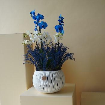 Blue & White Orchids