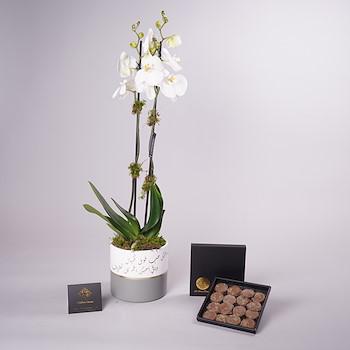 Single Orchid Vase 1