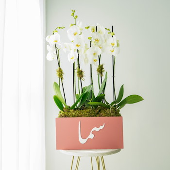 Customized Orchid