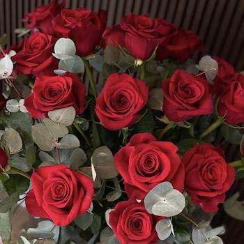 Deep Red Flowers