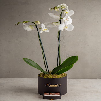 Orchid Plant 10