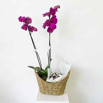 Purpella Orchide Basket 1