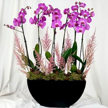 Purple Orchids II