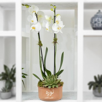 Ceramic Orchid II