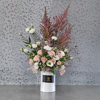 Astilbe Pink XII