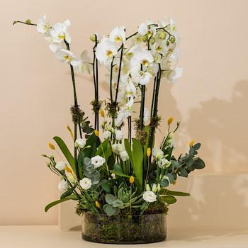 The Elegant Orchid  2