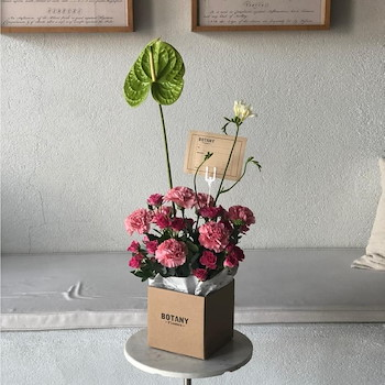 Carnation Box 1