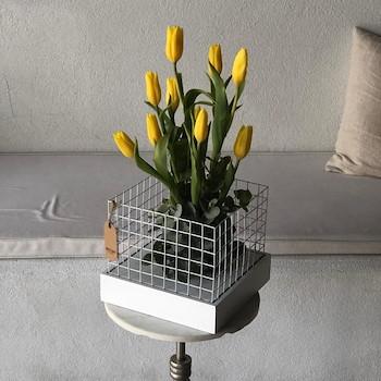 Secret Tulip 1