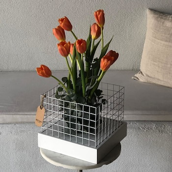 Secret Tulip 2
