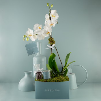 Orchidyas