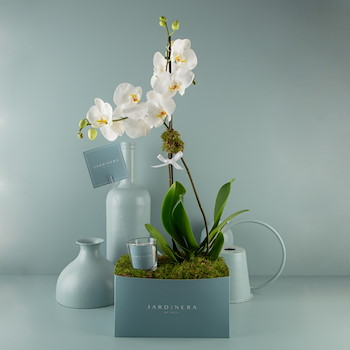 Orchidyas 1