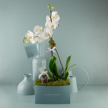 Orchidyas 2
