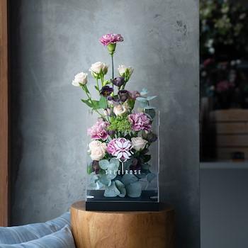 Sweetness Carnation I