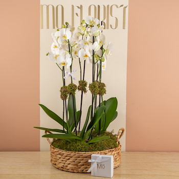 Orchids In Baskets 3