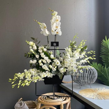 Elegant Plant