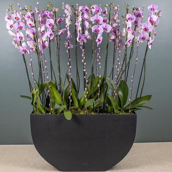 Bounty Orchids