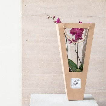 Orchids To Go 5