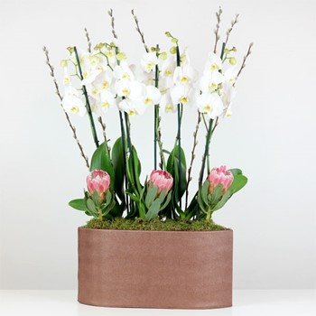 Orchidio