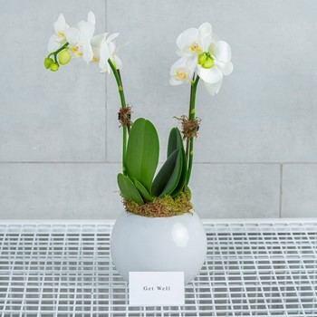 Victoria Orchids I