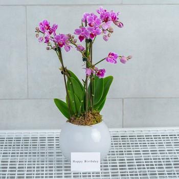 Victoria Orchids 2