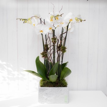 Squared Marble & Orchids