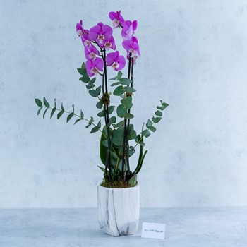 Marble Orchid III