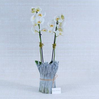 Flowers 53