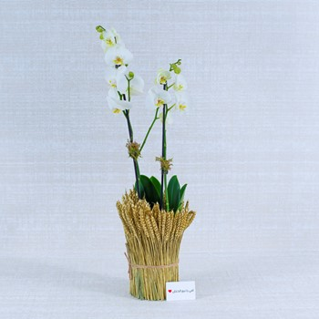 Flowers 55