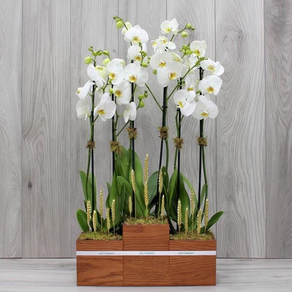 AM Flowers